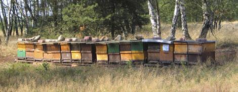 TMG_hives