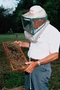 TMG_ed_bees