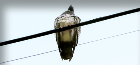 TMG_bird on wire