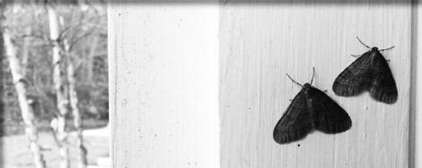 TMG_moths