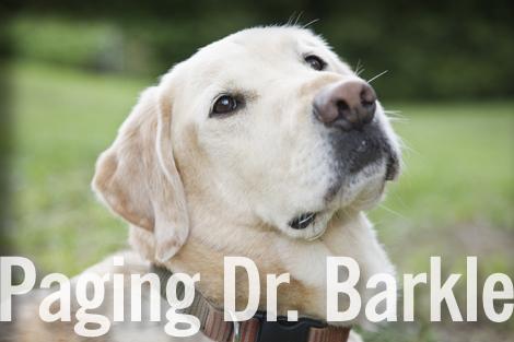 Dr_barkle