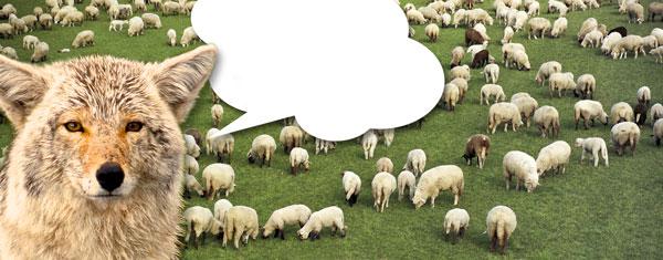 TMG_gryote+sheep_3