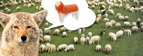 TMG_gryote+sheep4