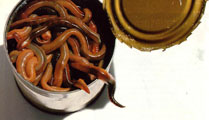 TMG_can-of-worms