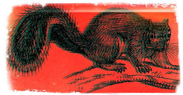 TMG_squirrel