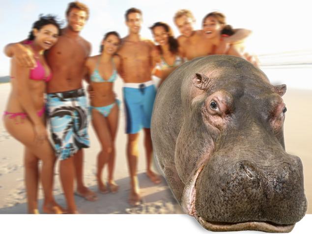 TMG_hippo
